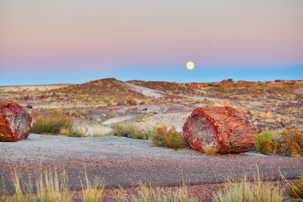 Petrified logs in the Painted desert and Petrified forest national park with full moon, Arizona, USA