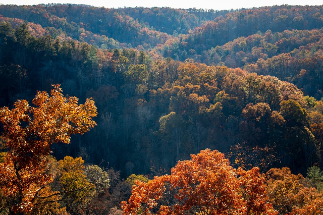 the Smoky Mountains with fall foliage turning leaves red and gold