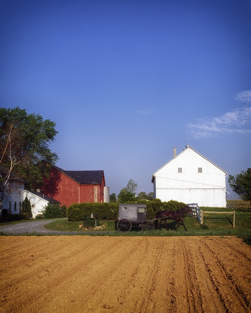 an Amish barn in Lancaster with a buggy in front
