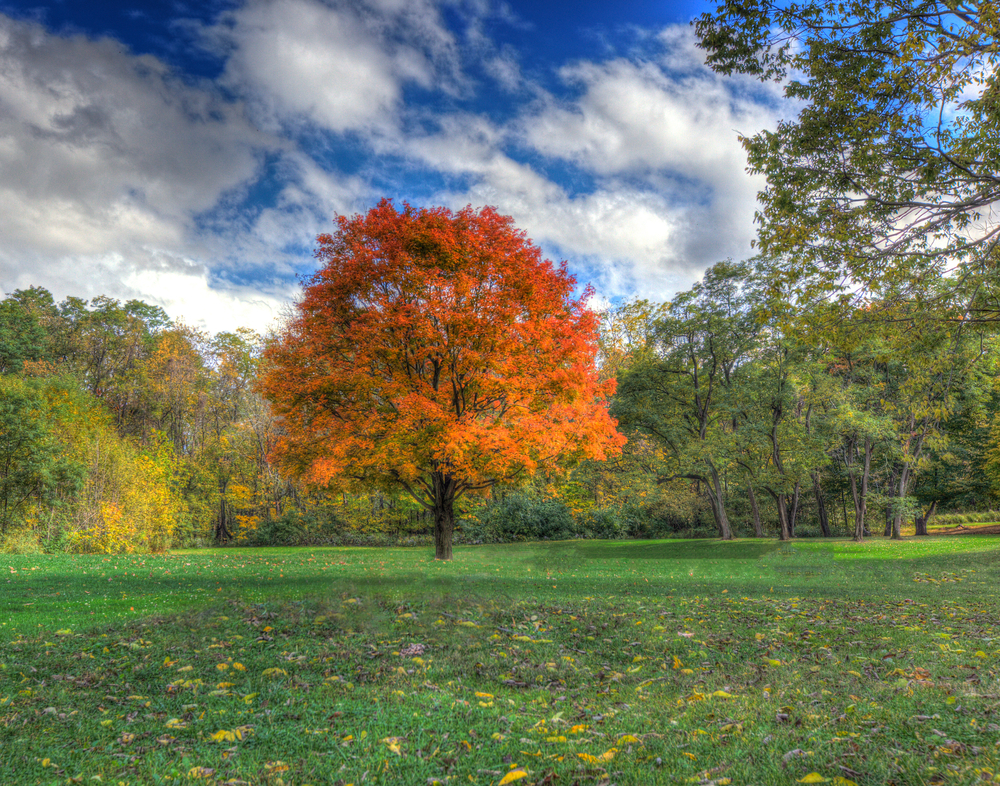 Fall foliage of Mounds State Park in Anderson Indiana