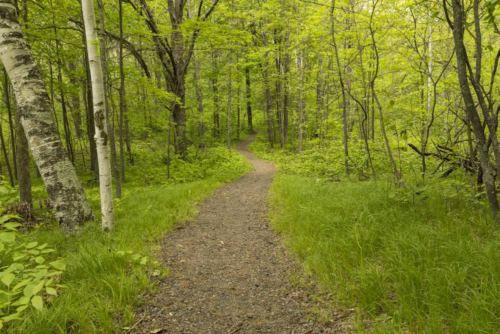 Hiking Trail In The Woods in Mille Lacs Kathio State Park
