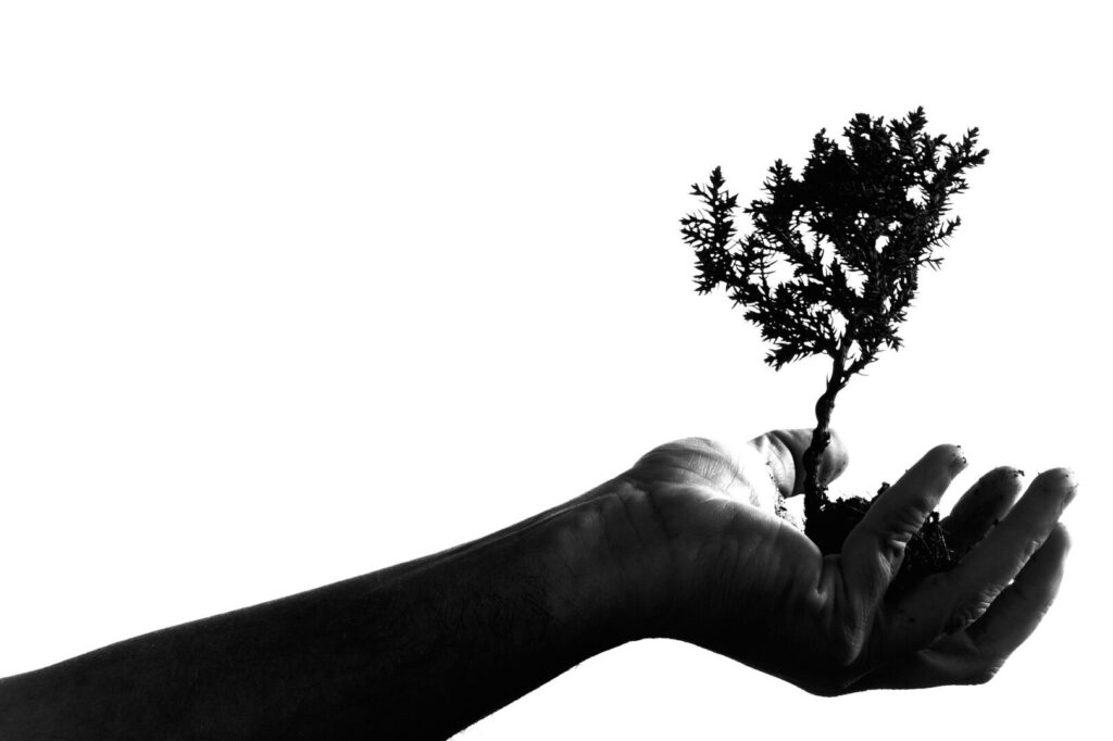 Small tree in hand