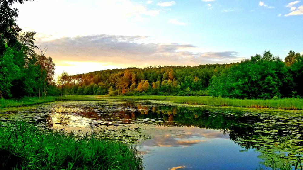 The sun setting over a small opening to a secluded lake within the Chippewa National Forest.