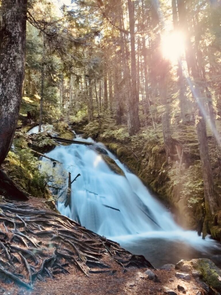 Waterfall in a forest