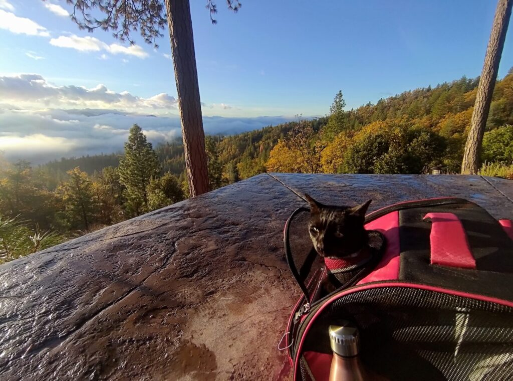 Small black cat sits in a carrier overlooking a gorge