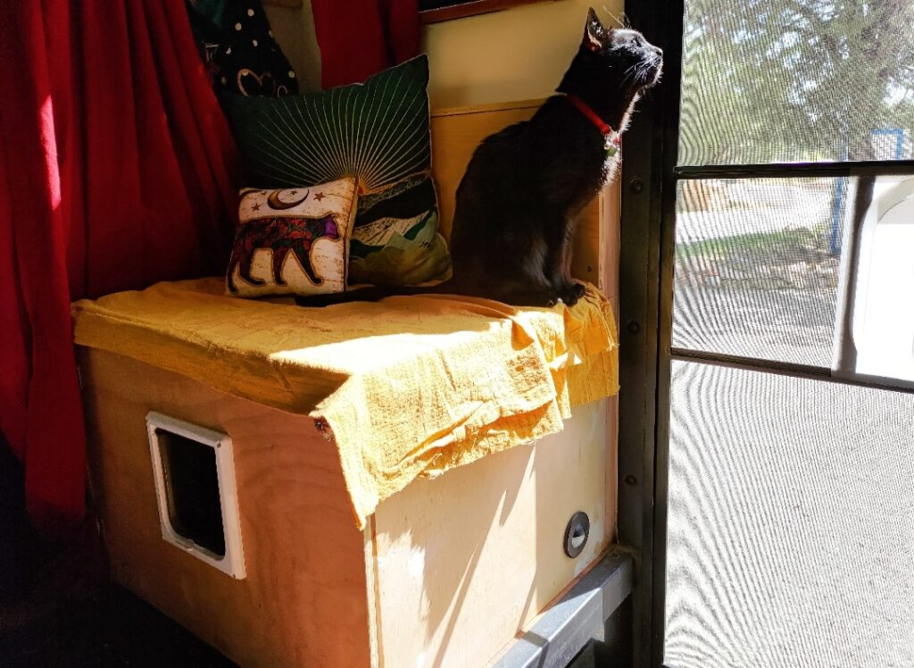 Small black cat sits on shelving in class c rv