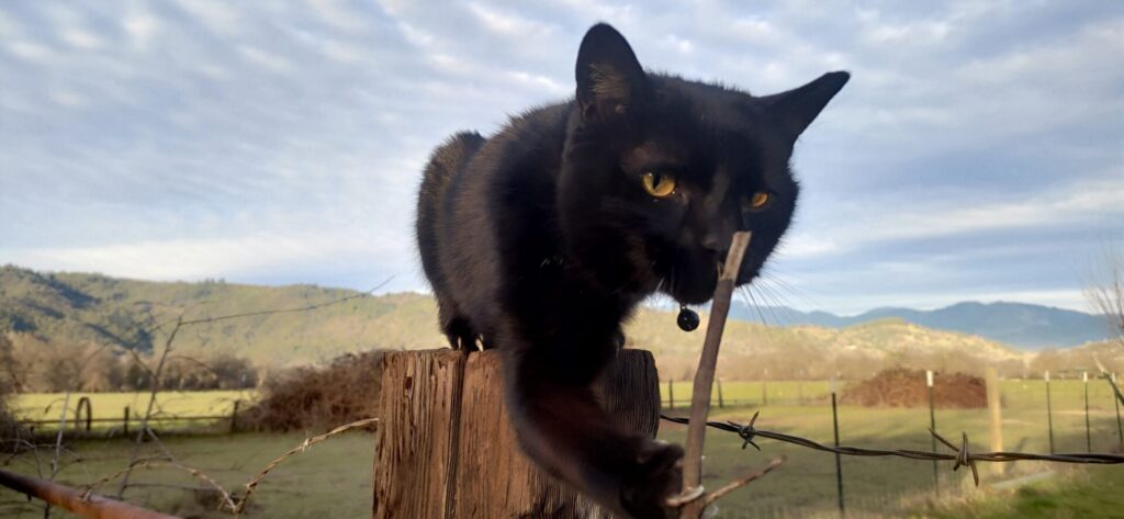 Black cat sits on a wood post with its paw outstretched