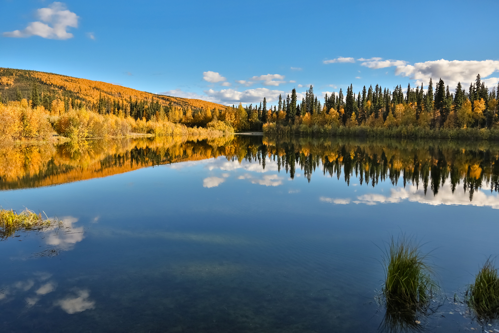 Panoramic view of the crystal clear 48 Mile Pond with reflections in fall, Chena River State Park, Alaska