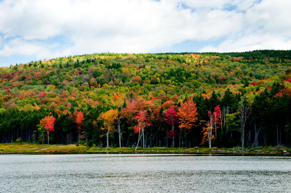 Shavers Lake as trees change color