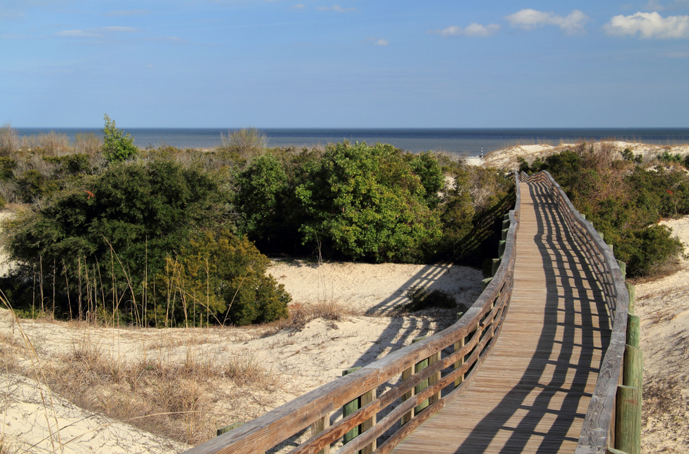 Cumberland Island National Seashore, located in the state of Georgia, is known for its vast beaches, its extensive trail network, and also for its resident population of wild horses and other wildlife