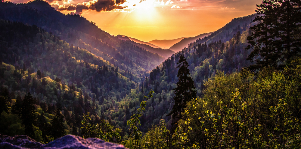 The sun setting over a vast mountain range covered in tall green trees.