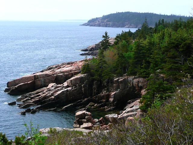 the coastline of Acadia National Park with pine trees reaching down to the rocky shore