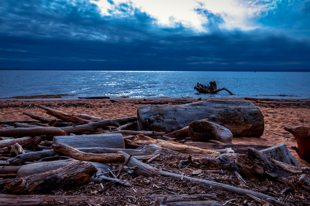 Hiking in Elk Neck State Park in Maryland, I happened upon some driftwood on the beach under some beautiful skies.
