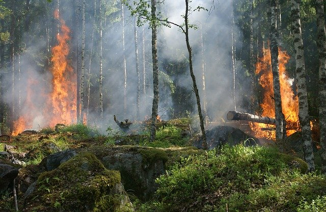 a forest fire leaves charred trees behind