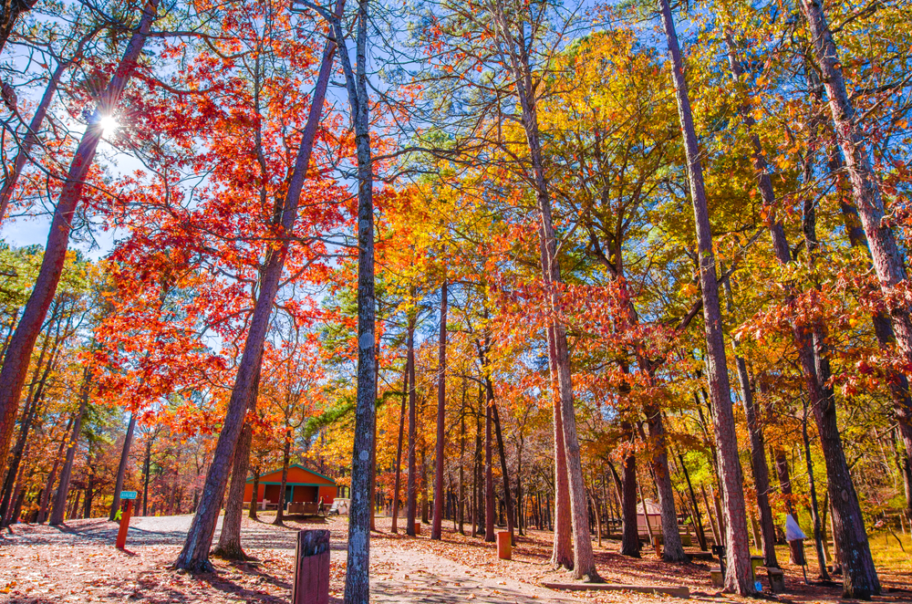 Tall trees with red, yellow and orange leaves tower above a pathway leading to a red and green building.