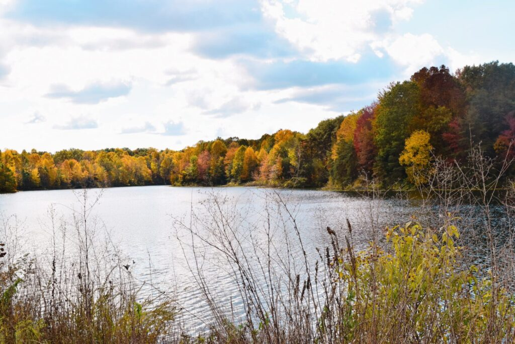Trees of various fall colors surround a serene lake with plants and branches in the foreground.