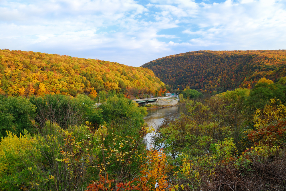 A river meanders through a valley of two hills covered in autumn leaves. Greenery and yellow flowers sit in the foreground.