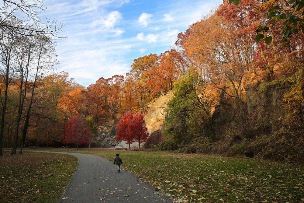 The rock climbing wall at Alapocas Run State Park, Wilmington, Delaware, USA in the colorful fall